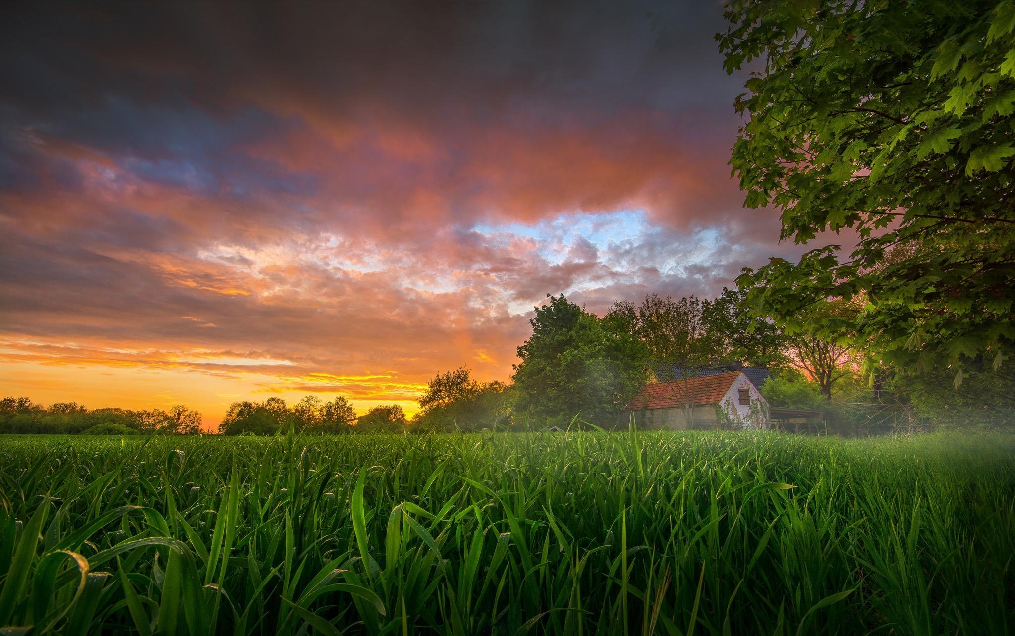Обои закат, поле, деревья, домик
