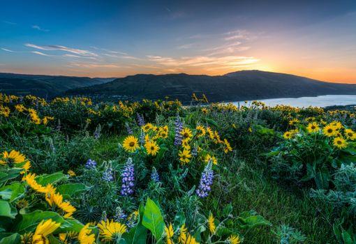 Фото бесплатно Columbia River Gorge, река, берег, цветы, пейзаж