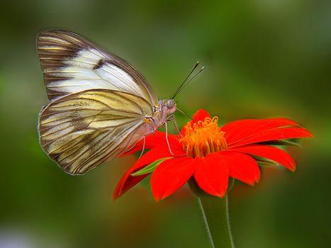 Photo free butterfly, flower, butterfly on flower