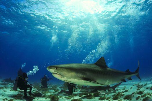 Фото бесплатно морское дно, морские обитатели, море