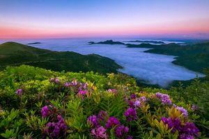 Бесплатные фото закат, горы, облака, цветы, пейзаж