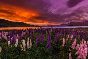 Бесплатные фото закат,поле,люпин,цветы,горы,озеро,пейзаж