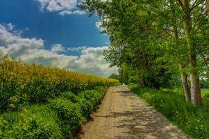 Фото бесплатно пейзаж, цветы, дорога