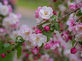 Бесплатные фото цветущая ветка,цветы,весна,флора,листья,цветок,цветение