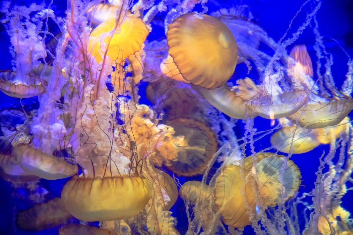Фото бесплатно море, вода, жидкость, морские обитатели, медузы, свечение, подводный мир, подводный мир