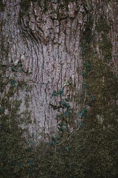 Заставки мох, дерево, кора