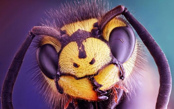 Photo free head of a wasp, close-up, eyes