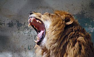 Фото бесплатно дикая природа, портрет, млекопитающее