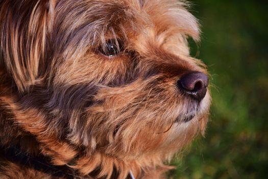 Фото бесплатно собака, вид в профиль, морда