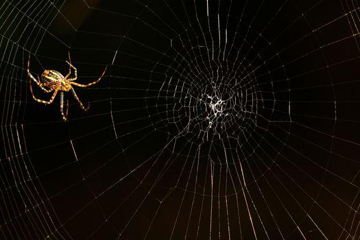 Photo free insect, macro, black background