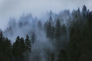 Фото растущих деревьев