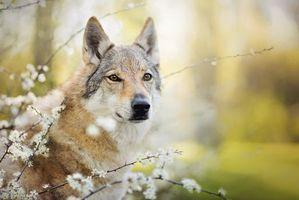 Бесплатные фото Волк, хищник, животное