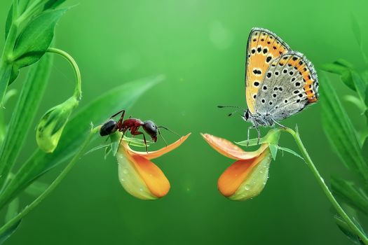 Photo free ant, butterfly, flowers