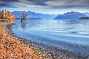Заставки Новая Зеландия,Уанака,дерево,озеро,горы,осень,пейзаж