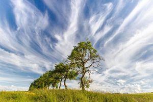 Бесплатные фото поле,небо,деревья,пейзаж