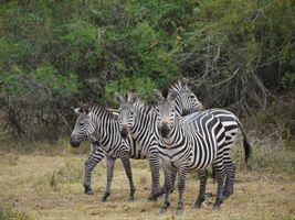 Фото бесплатно дикая природа, африке, ходьбы