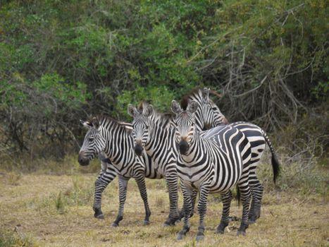 Photo free wildlife, africa, walk