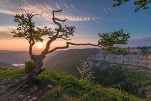 Фото бесплатно Швейцария, дерево, закат