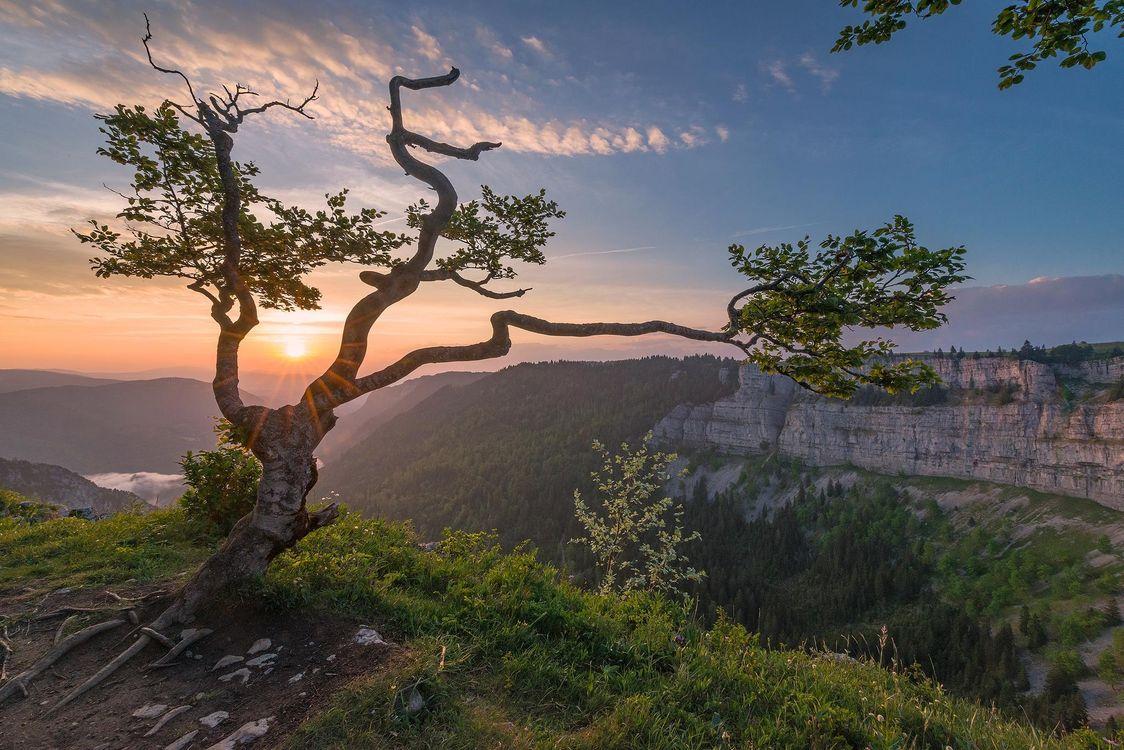 детьми картинка дерево на скале выкладывается снизу вверх