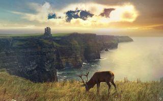 Photo free deer, fantasy, artist