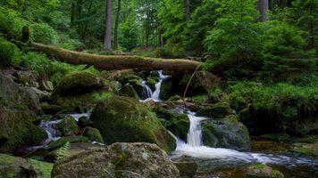 Фото бесплатно панорама, река, деревья