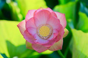 Фото бесплатно водная красота, пруд, красивый цветок