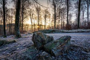 Бесплатные фото осень, лес, деревья, дорога, закат, пейзаж