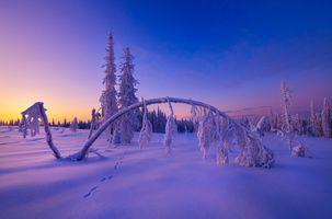 Заставки снег, следы, природа