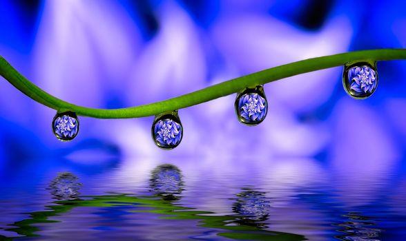 Фото бесплатно капля, отражение, макро