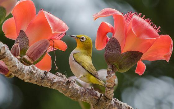 Фото бесплатно птица, розовые цветы, ветвь