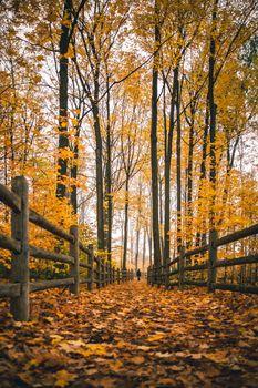 Заставки осень, падение, забор