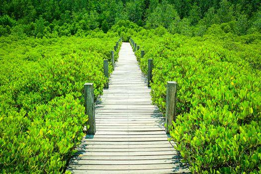 Photo free mangrove, plant, green