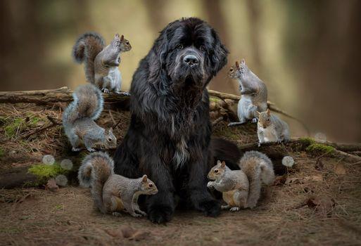 Заставки животные, собака, белки