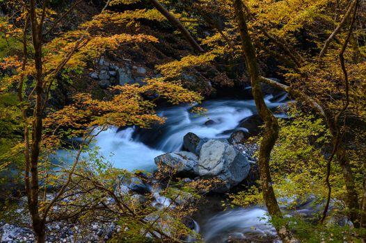 Фото бесплатно природа, Япония, леса