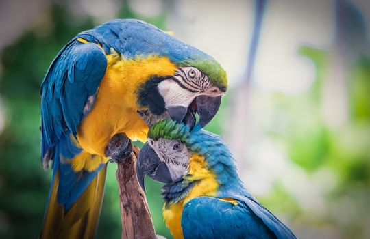 Photo free Blue Macaw, parrots, birds