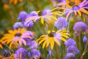 Фото бесплатно красивые, флористические, красочные
