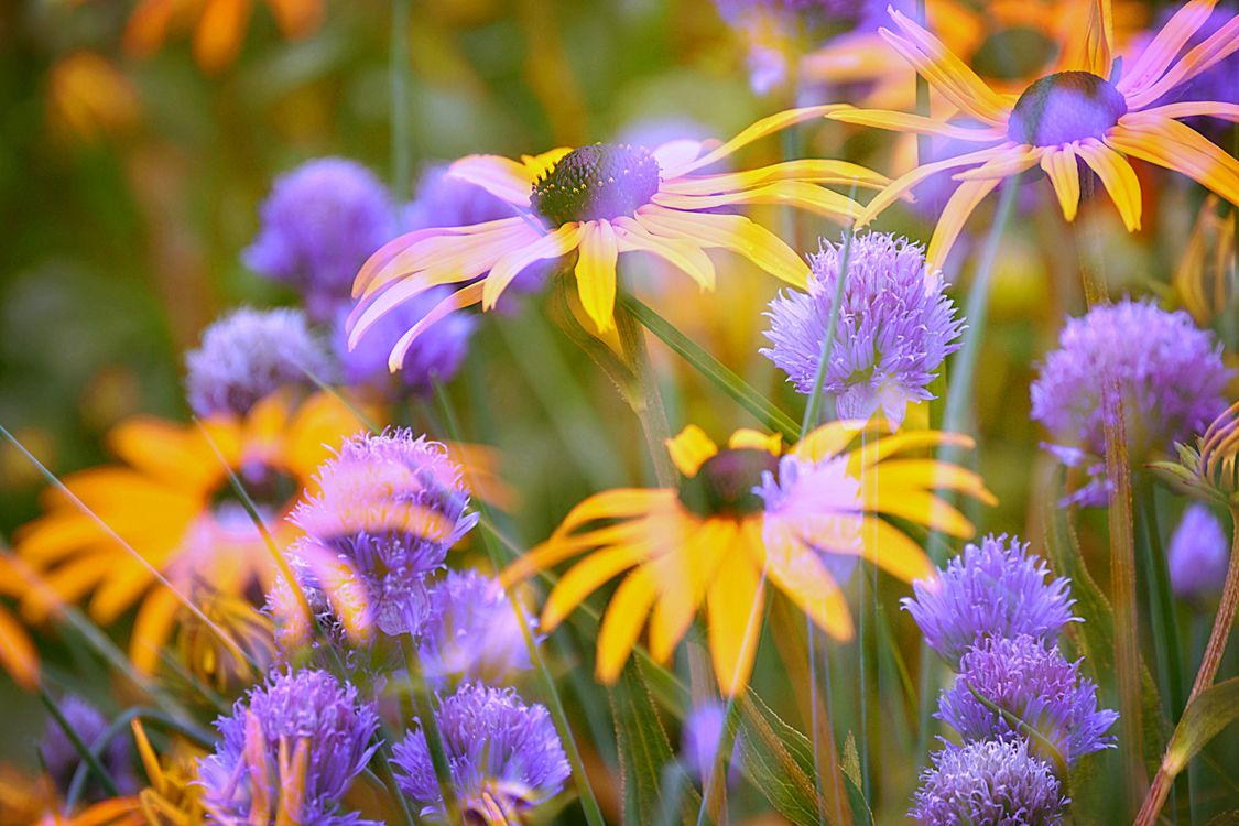 Photos for free beautiful, flower arrangement, colorful - to the desktop