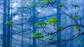 Бесплатные фото лес,туман,ветки,листья,паутина,природа