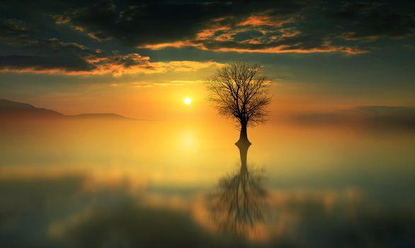 Photo free lone tree, sunset, reflection