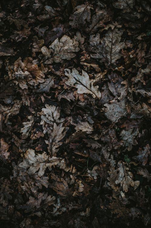 Листья дуба · бесплатная заставка