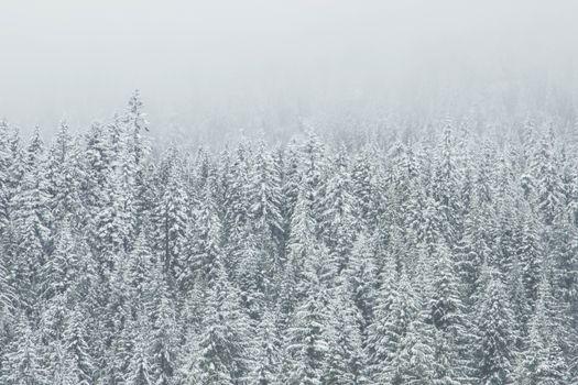 Фото бесплатно холодный, дерево, туманный