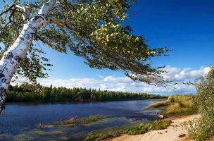 Фото бесплатно река, лес, деревья, лодка, пейзаж