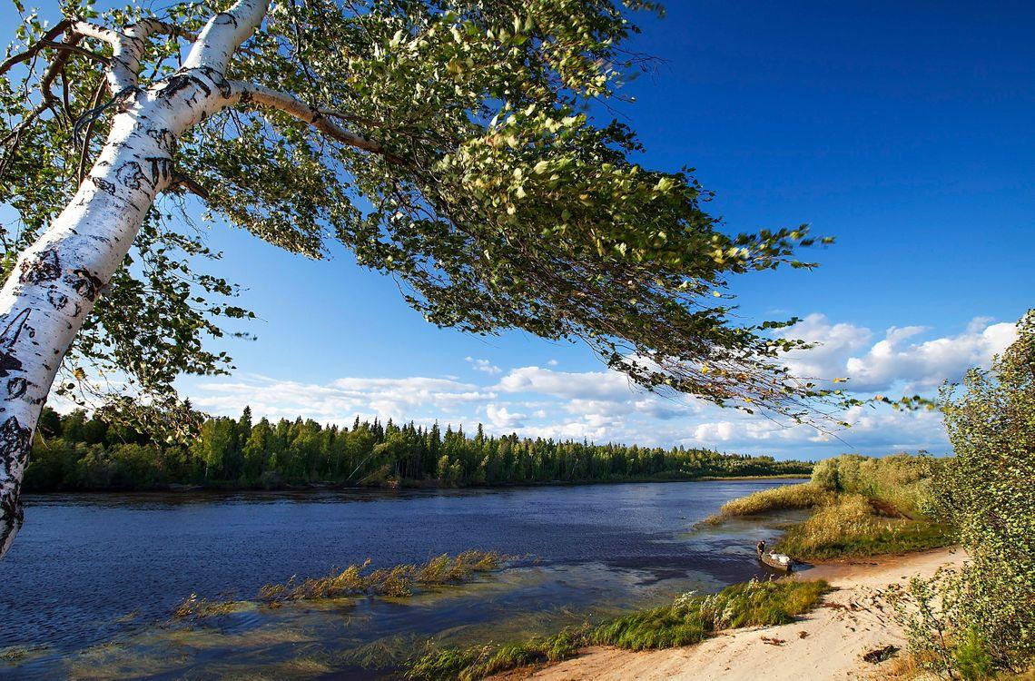 Фото бесплатно лодка, лес, деревья - на рабочий стол