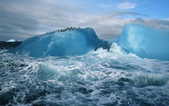 Photo free glacier, penguins, iceberg