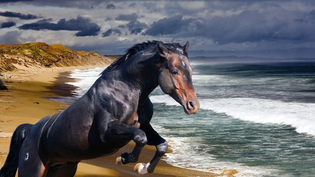 Photo free mare, animals, mammal