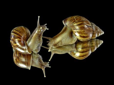 Beautiful screensaver gastropoda, gastropods