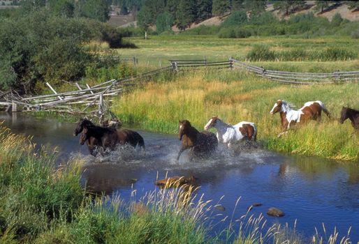 Фото бесплатно поле, лошади, прекрасная