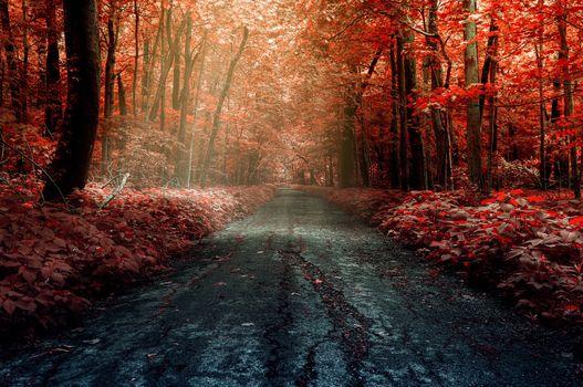 Фото бесплатно лист, природа, цветок