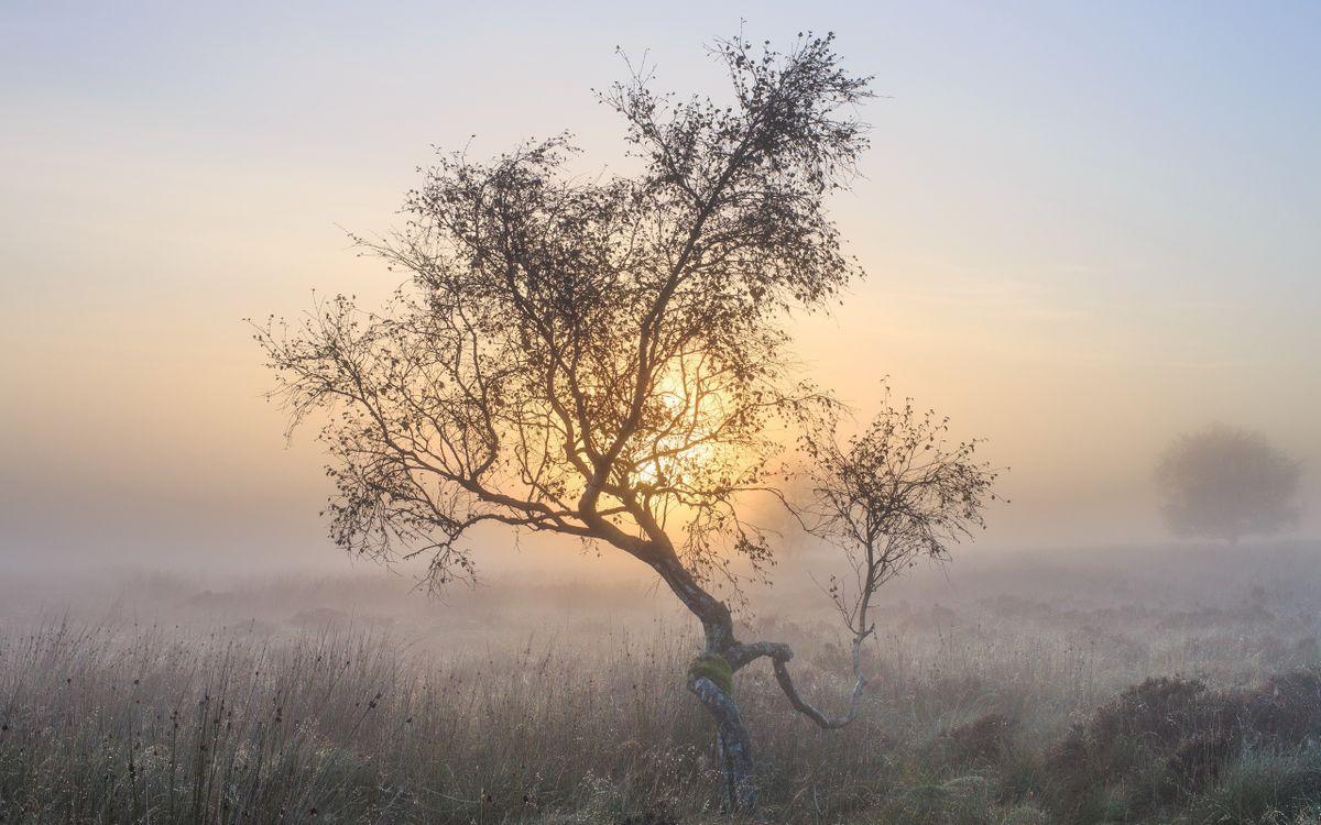Фото простой атмосферное явление мороз - бесплатные картинки на Fonwall