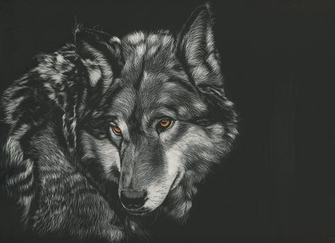 Фото бесплатно волк, животные, монохромный